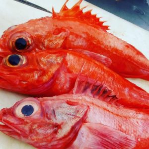 red-snapper-thornyhead-sold-per-lb-order-online-schedule-pick-up-oceanside-harbor-california